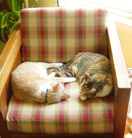 20040529.kitties